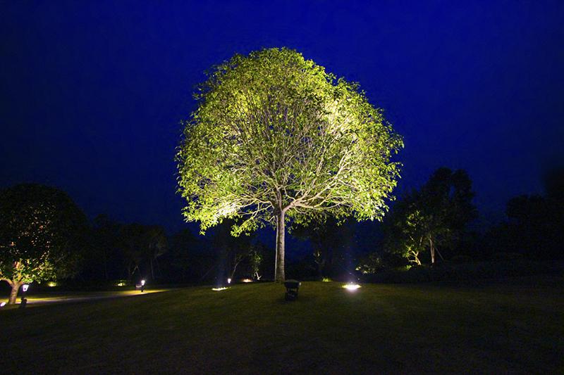 Đèn LEd chiếu sáng cây